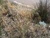 058_Trapani_Ronciglio_flora_Lagurus_ovatus.jpg