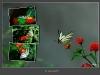 005-Farfalla_Macaone.jpg