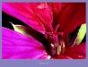 014-Petali-Close_up.jpg