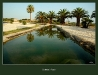 011-Trapani-Marausa_s_Oasis-.jpg