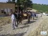 IMGP3855_la_percorre_la_trazzera_che_porta_al_campo_di_grano.JPG