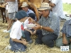 IMGP4010_i_contadini_imboccano_i_loro_figli_o_nipoti.JPG