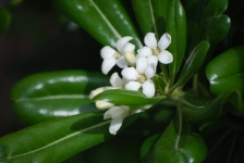 fiori_e_piante_trapanesi-01