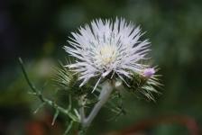 Fiori_e_piante_trapanesi-03