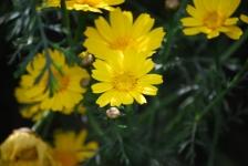 Fiori_e_piante_trapanesi-07