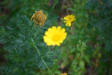 Fiori_e_piante_trapanesi-10