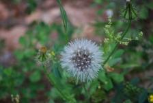Fiori_e_piante_trapanesi-11