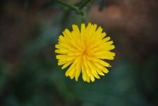Fiori_e_piante_trapanesi-18