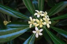Fiori_e_piante_trapanesi-21