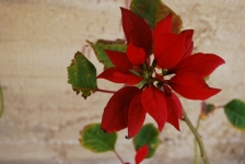 Fiori_e_piante_trapanesi-23