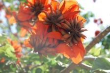 Fiori_e_piante_trapanesi-31