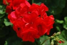 Fiori_e_piante_trapanesi-32