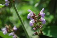 Fiori_e_piante_trapanesi-35