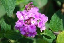 Fiori_e_piante_trapanesi-36