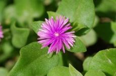Fiori_e_piante_trapanesi-37