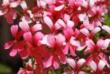 Fiori_e_piante_trapanesi-39