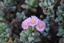 Fiori_e_piante_trapanesi-41